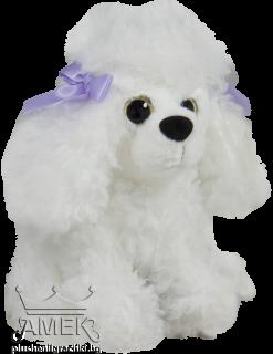 Куче Пудел с големи очи